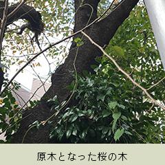 原木となった桜の木